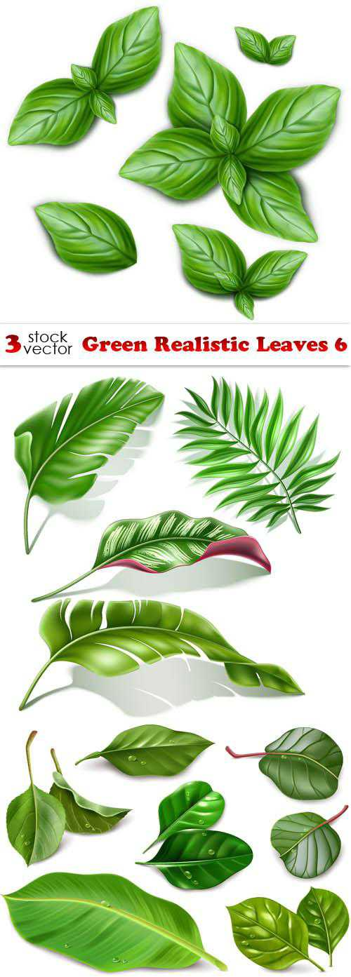 Green Realistic Leaves 6