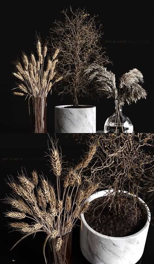 Dry plants collection