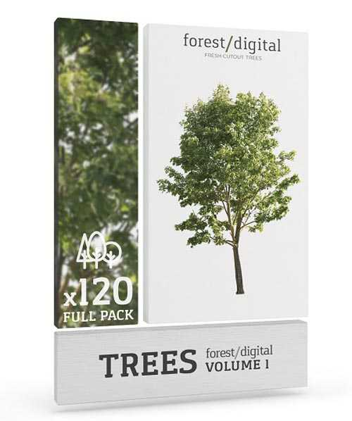Forest Digital – Trees Spring and Autumn Trees