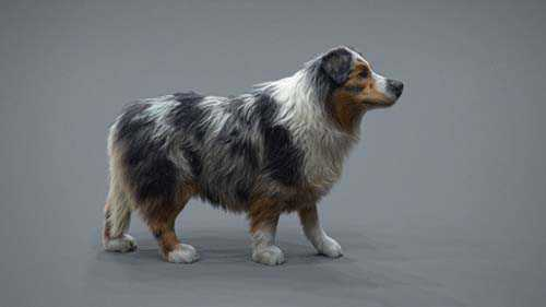 The Gnomon Workshop – Realistic Dog Grooming for Production with XGen with Jordan Soler