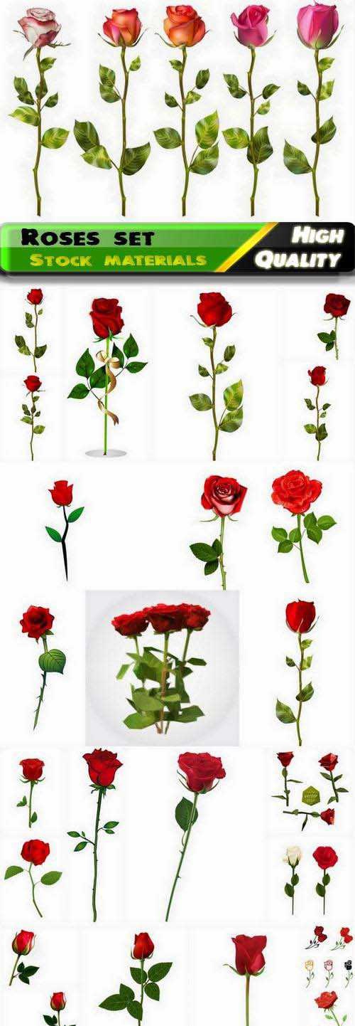 Realistic red roses illustrations