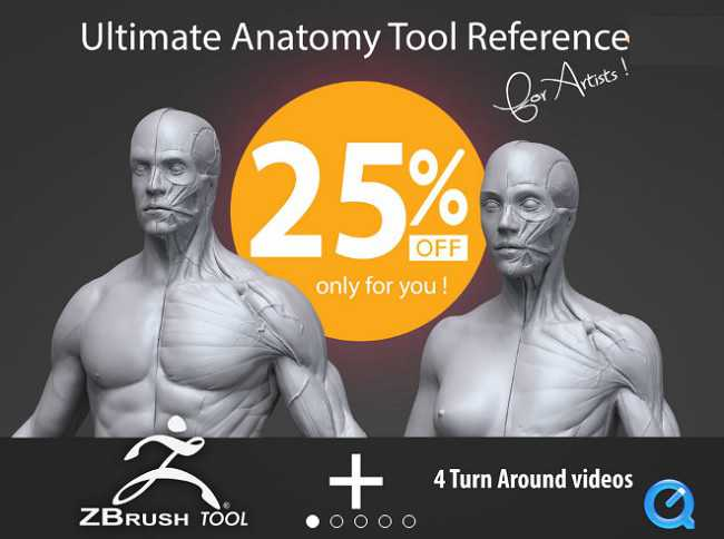 Gumroad - Ultimate Anatomy Tool Reference for Artists