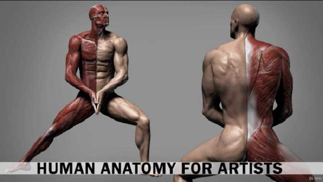 Udemy – Human Anatomy for Artists using Zbrush and Photoshop