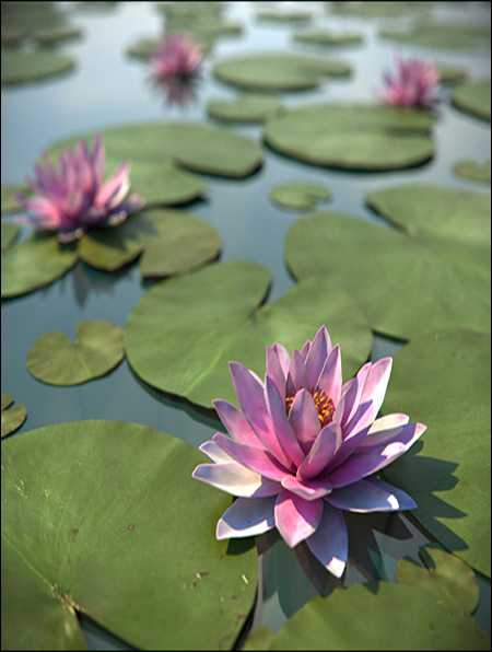 TurboSquid Water Lily